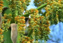 La principal característica de estas plantas exóticas es que pueden tardar hasta 100 años en florecer. Lo mejor es que puedes visitarla.