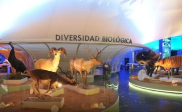 bóvedas del Museo de Historia Natural