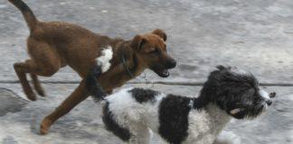 matanza en un centro de control canino