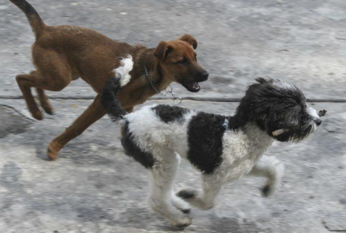 parque para perros en Iztapalapa