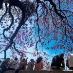 diez-lugares-para-tomar-fotos-espectaculares-de-jacarandas-en-cdmx
