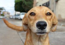 Cómo denunciar maltrato animal en la CDMX