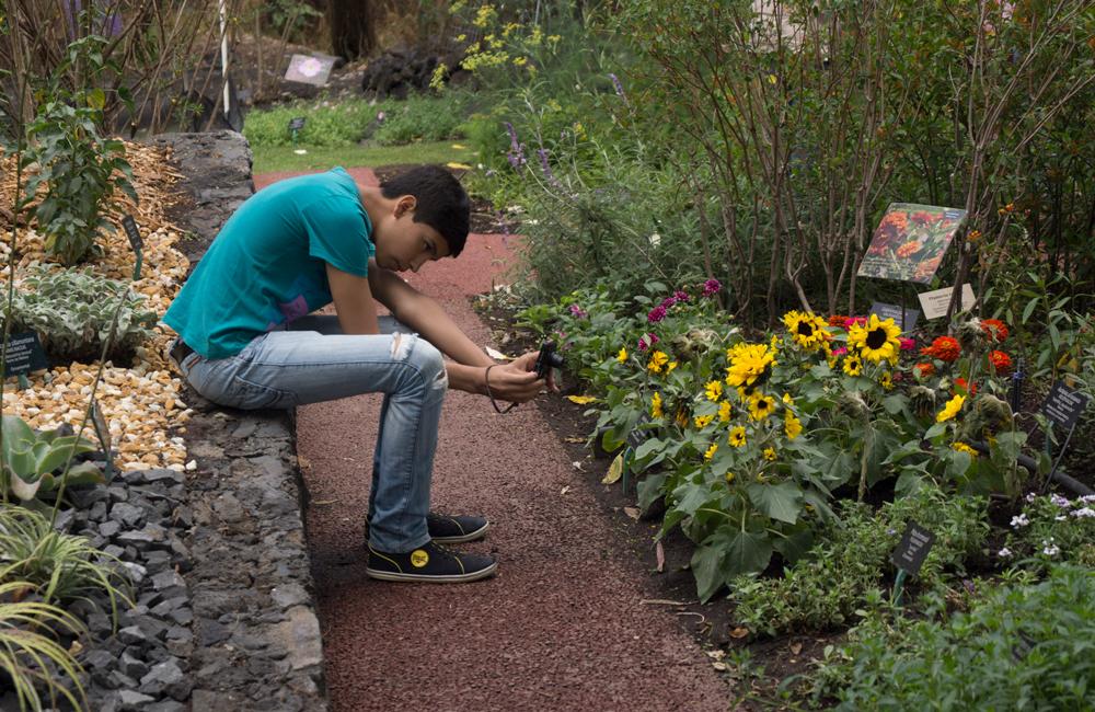 Sab as que existe el d a nacional de los jardines bot nicos for Los jardines del califa