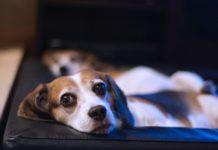 netflix con mascotas