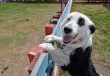 nombres más comunes de perros