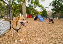 parques para perros en la CDMX