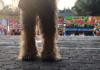 Chewbacca en Xochimilco