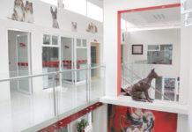 hospital veterinario gratuito