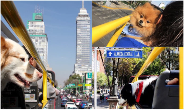 Turibus para perros