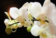 exhibición Orquídeas
