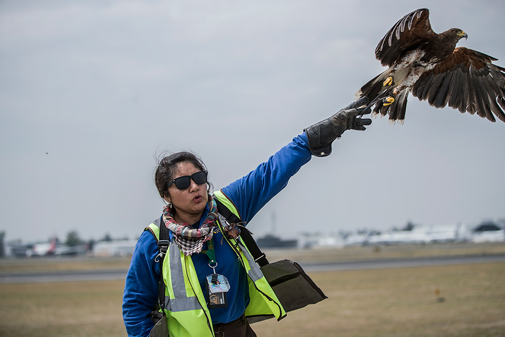 halcones del aeropuerto