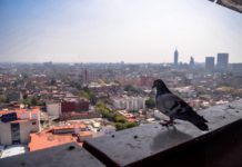 palomas en la CDMX