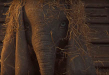 Teaser Tráiler de Dumbo