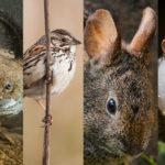 fauna-chilanga-guia-de-las-especies-endemicas-de-la-cdmx