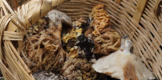 hongos silvestres en CDMX