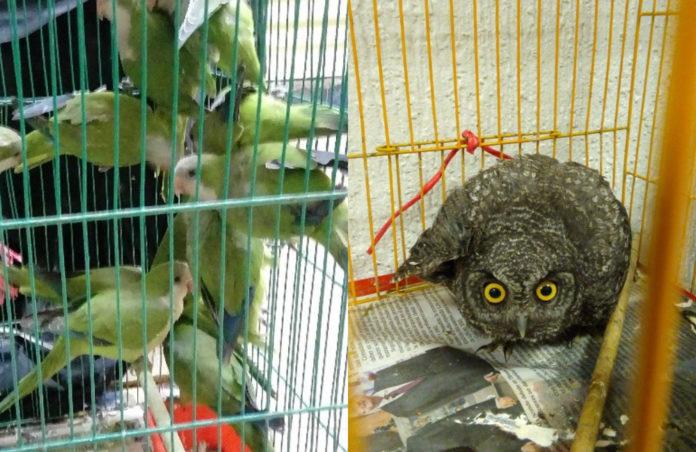 Rescatan a más de 50 animales en Mercado de Sonora