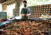 Festival de Hongos Silvestres