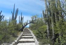 Tehuacán Cuicatlán es Patrimonio de la Humanidad
