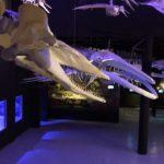 fosiles-de-ballena-y-dientes-de-sable-en-esta-exposicion