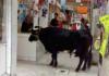 toro en un mercado de tláhuac