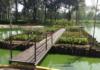 ajolotes al lago del parque Tezozomoc