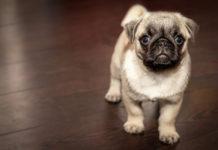 5 lugares que ofrecen hospedaje para perros en la CDMX