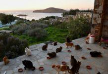 Buscan cuidador para un santuario de gatos en una isla paradisíaca
