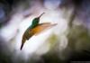 Dónde ver colibríes en la CDMX