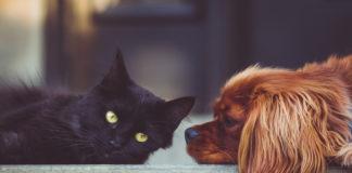 registro de animales de compañía
