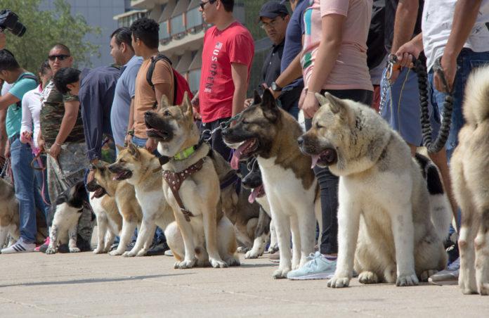 Feria Animalista Cuauhtémoc 2019