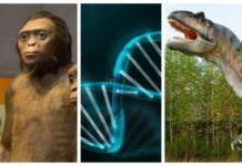 Mes de la evolución en Universum