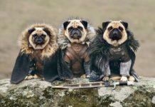 Cuarta reunión masiva de Pugs