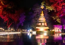 árboles navideños en la cdmx