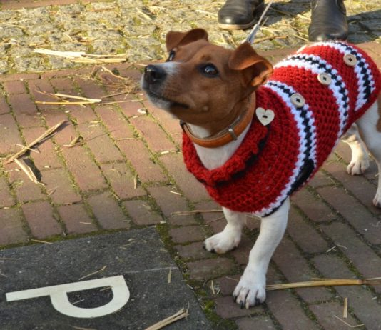 Dónde comprar suéteres para mascotas