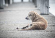 Perros abandonados en la cdmx