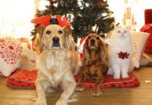 festival navideño de adopciones