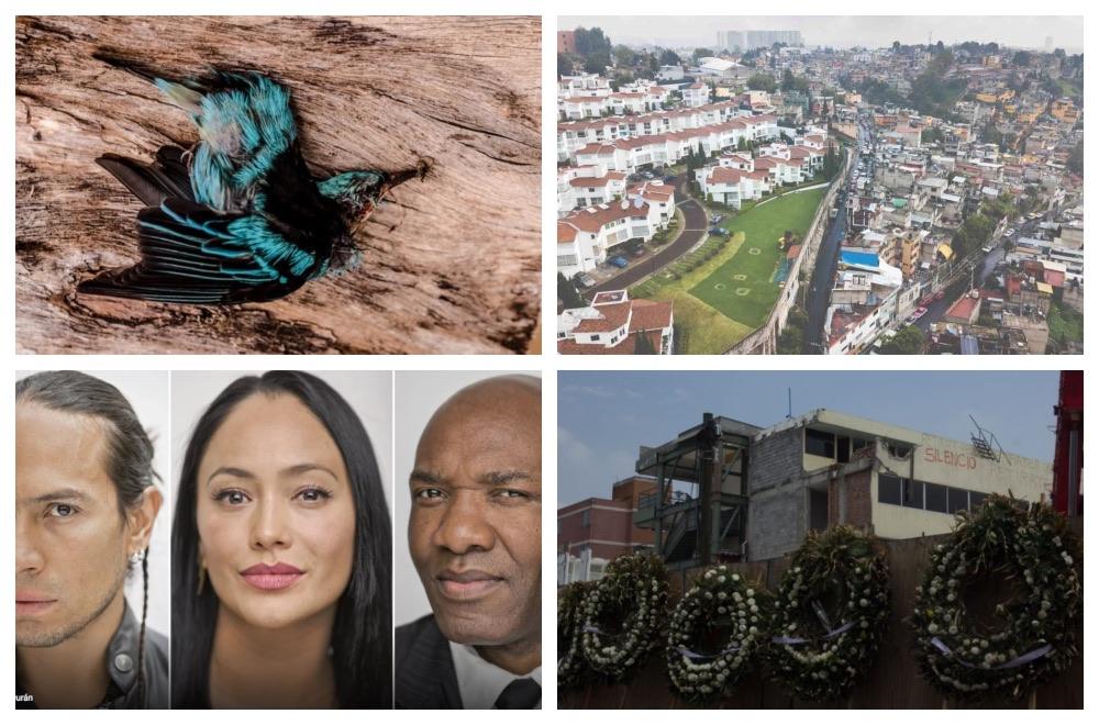 De colibríes, racismo y desigualdad: nuestros 10 mejores reportajes