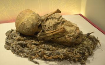 exposición de momias en CDMX
