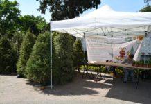 ¡Ni se te ocurra dejarlo en la calle! Una vez concluido el Guadalupe-Reyes, ya abrieron los primeros centros de acopio para árboles de Navidad