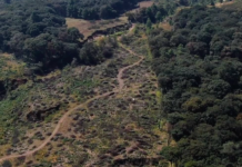bosque de Jilotzingo