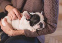 Gasto en mascotas, mayor al que hacemos en productos de limpieza