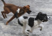 Festival canino en la Venustiano Carranza