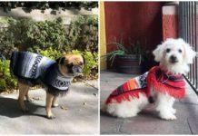 jorongos para perros