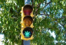 amparo para el consumo lúdico de marihuana