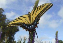 Quinto Concurso Nacional de Fotografía de Naturaleza