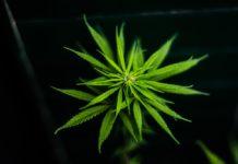 Tenemos que hablar de marihuana sopitas