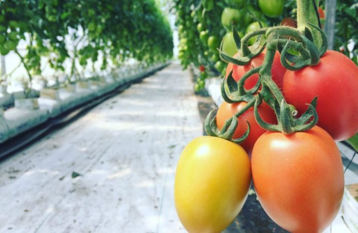 ¡Pásale! Pruducen y comercializan frutas y verduras en Fes Aragón
