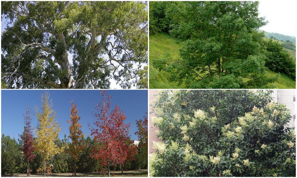 árboles para bajar el calor