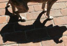 La Procuraduría General de Justicia (PGJ) de la Ciudad de México busca a las personas que aventaron a dos perros desde el segundo piso de un establecimiento ubicado en el Centro Histórico.