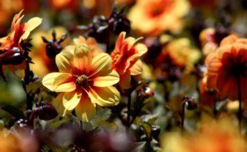 carnaval de las flores